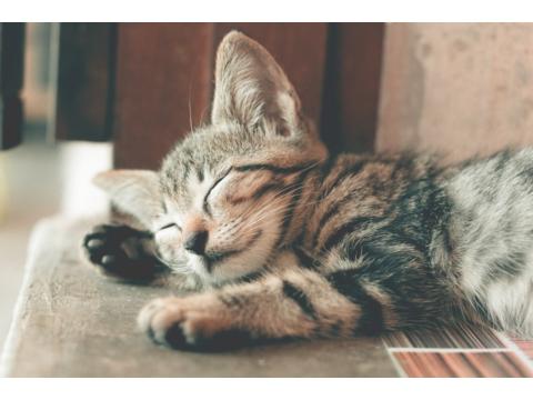 A macskatartás alap felszerelései